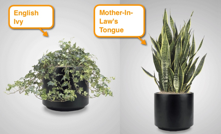 best plants for office cubicle. easycare indoor office plants best for cubicle interior plantscape
