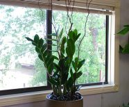 Interior plants for Assisted Living Facility