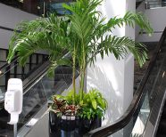 Interior Plants create a Working Atmosphere, Office Productivity increases with intierior plants, Office Plants create a healthy work environment , Office Interior Plants increase productivity an average of 12%