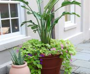 Outdoor Plants, Exterior Plants, Outdoor Venue Plants, Exterior Container Plants, Outdoor plants for Businesses