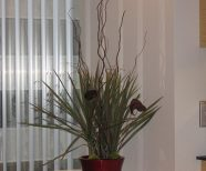 Floral Preserved Arrangements, Interior Living Plants, low maintenance preserved plants