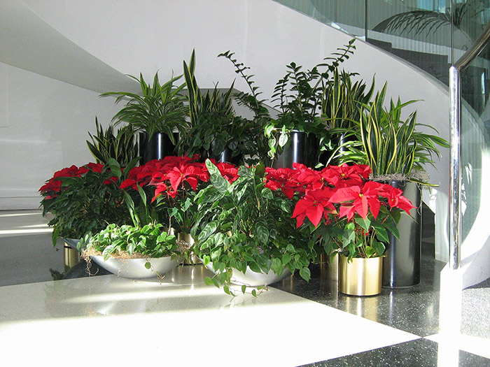 Exceptional ... Holiday Decor, Holiday Plant Arrangements In Greenville ...