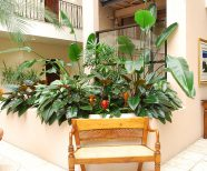 Interior Living Plants help your guests feel at home, indoor plants for the Hospitality Business