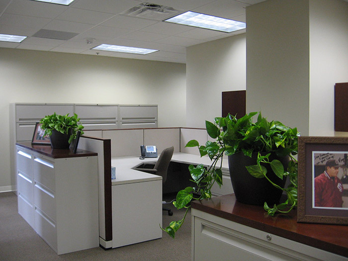 office plant hire, flower wall hire sydney