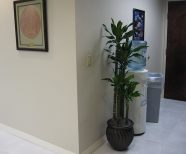 Interior plants in medical facilities create a Healthy feel, Living Plants in a Doctors office put patients at ease