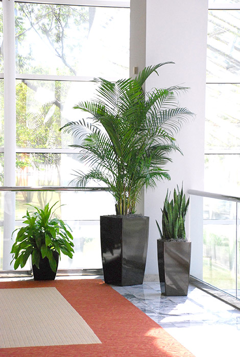 ... Interior Plants In Medical Facilities Create A Healthy Feel, Living  Plants In A Doctors Office ...